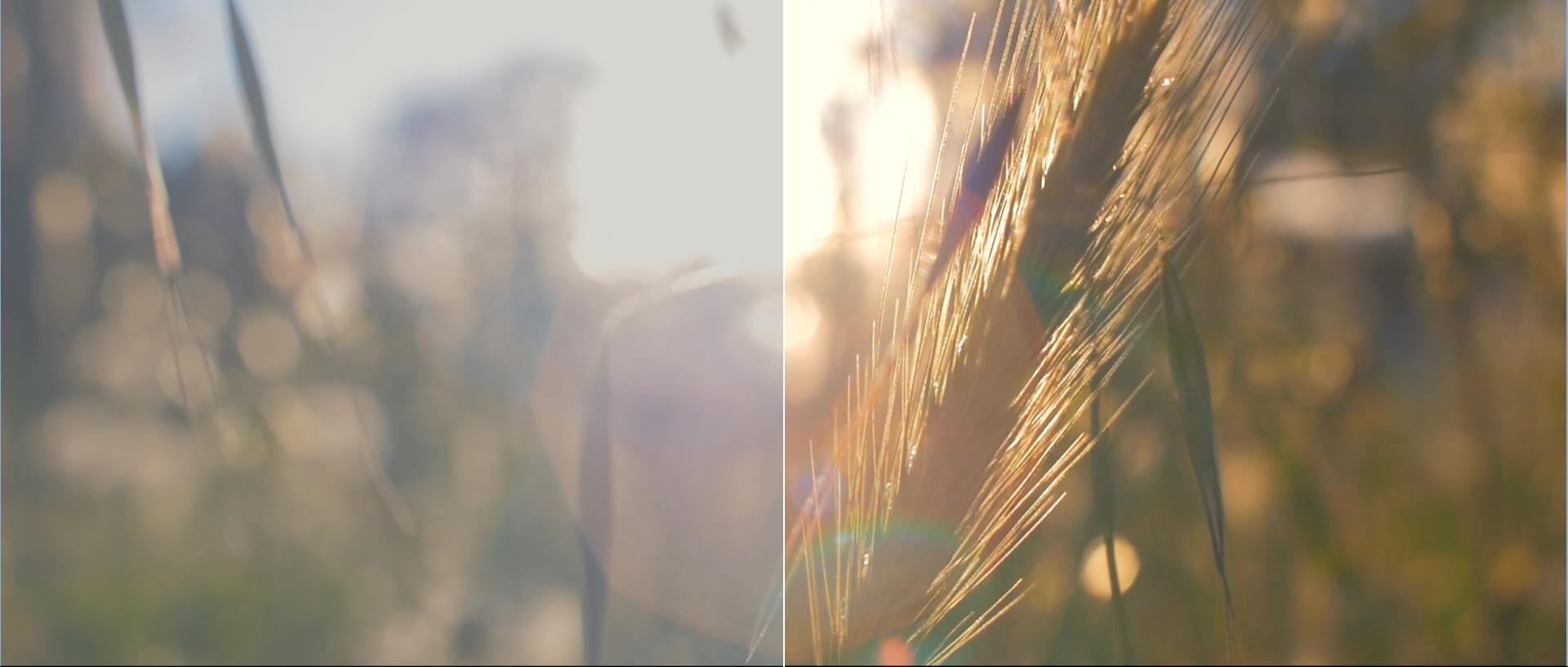 virtual art SIERRA MARIOLA color grade empresa etalonaje valencia barcelona madrid bilbao sevilla zaragoza visual art color grading